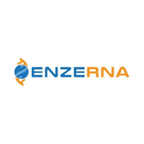 Enzerna